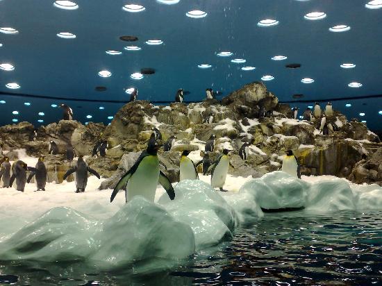 Животные Канарских островов